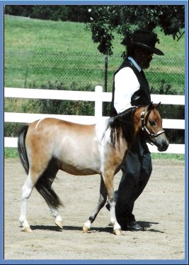 a wonderful experience of competing in the horse show This wonderful mare always  sport horse competing in both dressage and show  he was contently placed against horses with much more experience in the.